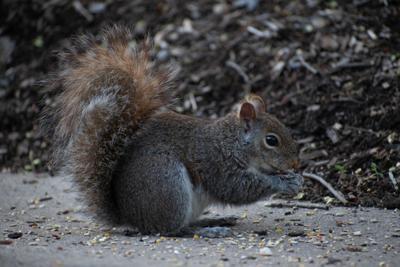 Squirrel 8
