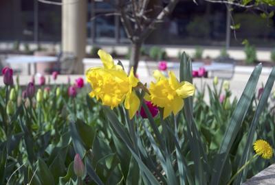 Allen Street Flowers