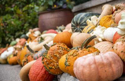 Thousands attend Arboretum's Pumpkin Festival to welcome fall season at Penn State