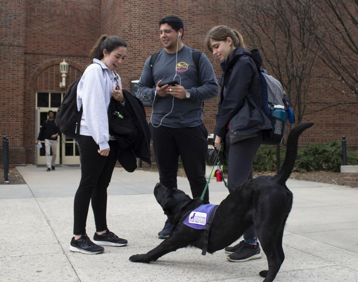 PHOTO STORY: A Day in the Life of a Service Dog in Training