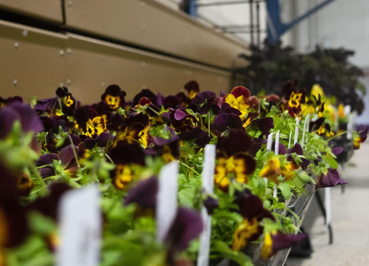 Horticulture Show, Flowers