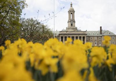Daffodils by Old Main