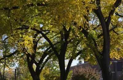 Fall Leaves, trees