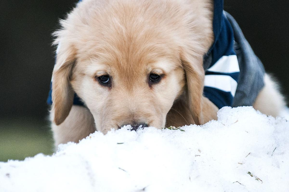 photo gallery why every day should be national puppy day campus