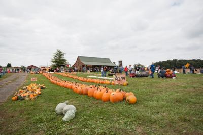 Sinkland Farms Annual Pumpkin Festival Starts This Weekend Collegiatetimes Com