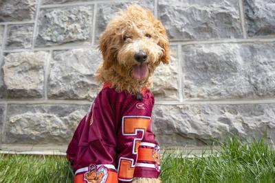 Dog on Campus