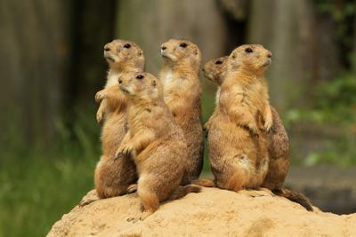 Bill on Great Outdoors Colorado gets opposition based on prairie dogs, coyotes