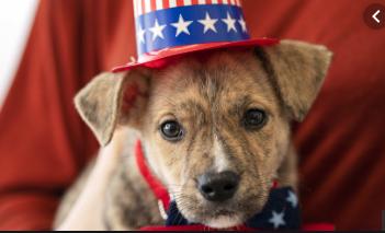 ASPCA dogs vote!