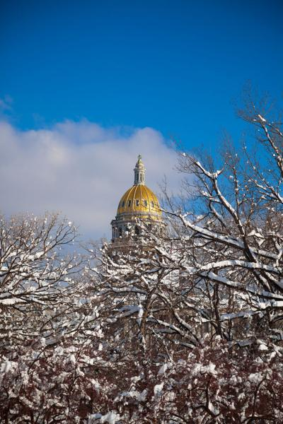 Snow Covered Trees and Denver Capitol Building