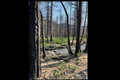 Cameron Peak burn area