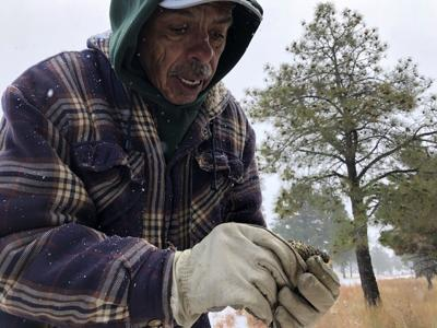 Wildfires Picking Pine Cones
