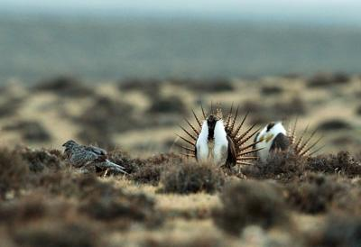 More state control of wildlife conservation examined at U.S. Senate hearing