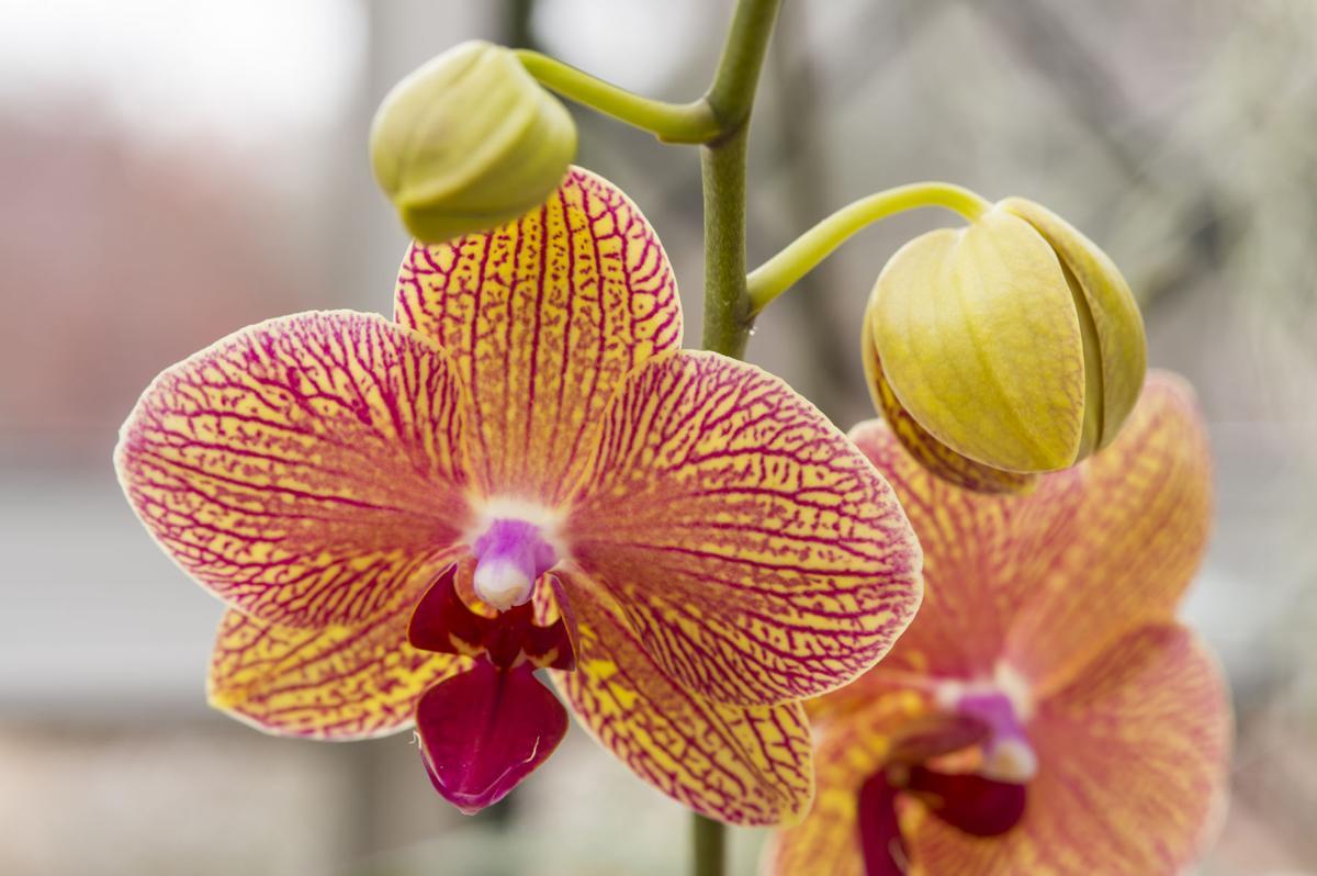 20130112_orchid-display-028.jpg