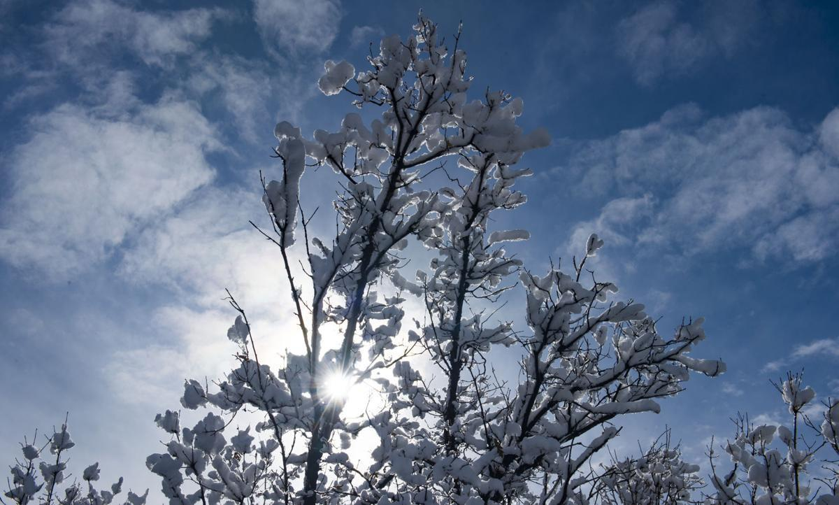 winter watering snow covered tree at red rocks open space 103118 dougal photo.jpg