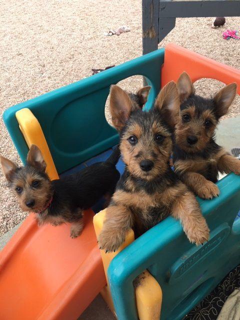 062719 dogs.jpg