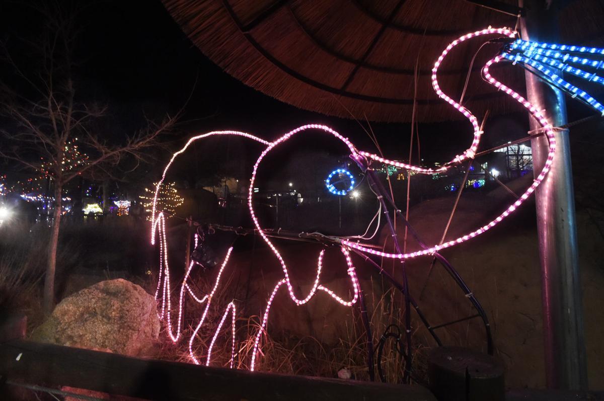electric safari2.jpg