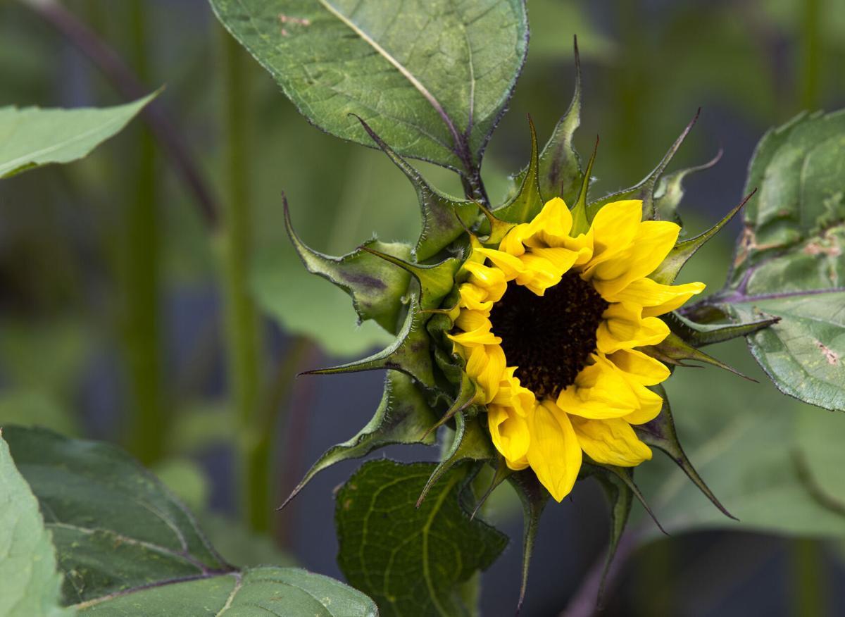 071021-hg-flower-farm 4.jpg