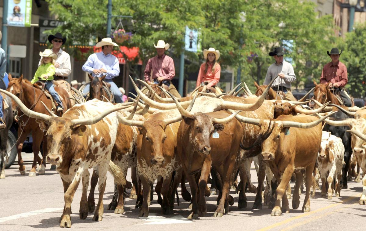 Longhorn cattle drive.jpg