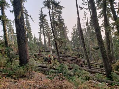 11-11 forest trails debris and wind damage, near Timberline to Town Trail-CLR.jpg
