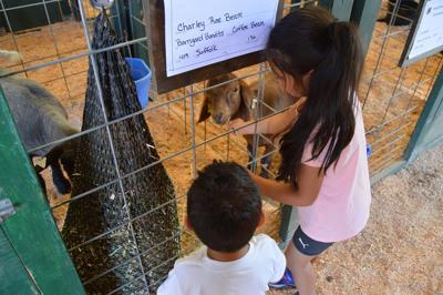 Elizabeth and Isaiah Heredia feed goats.JPG