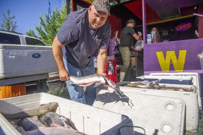 Wild Columbia Salmon sales
