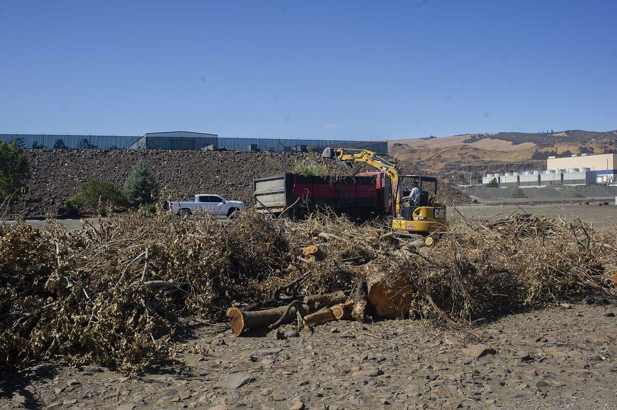 Riverfront trail illegal clear cut