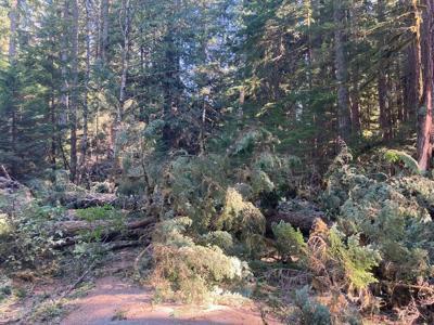 thumbnail_Road near Ramona Falls after windstorm damage 09.12.20.jpg