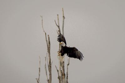 Eagles Elkinton