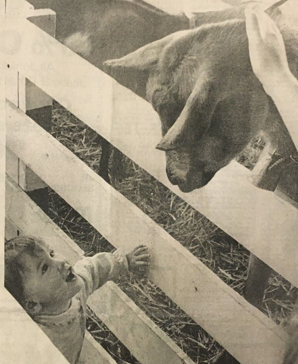 Hood River County Fair 1981