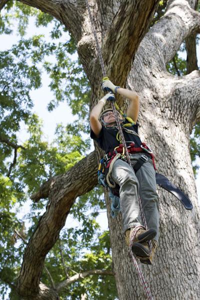 Ann Koenig climbs a tree