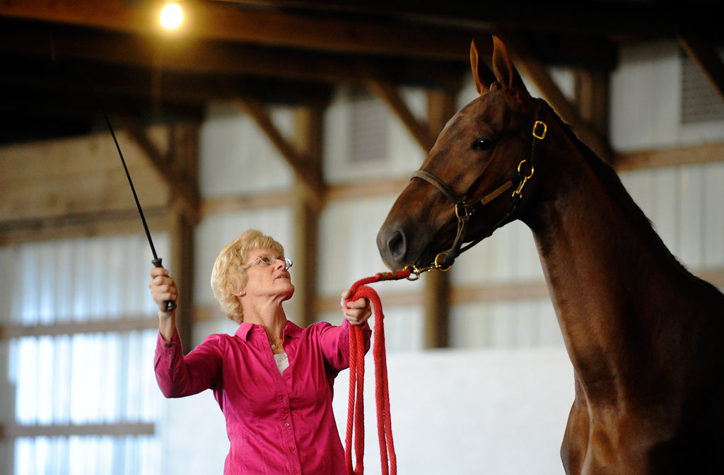 765911249 Boone County a 'hotbed for horses' | Local | columbiamissourian.com