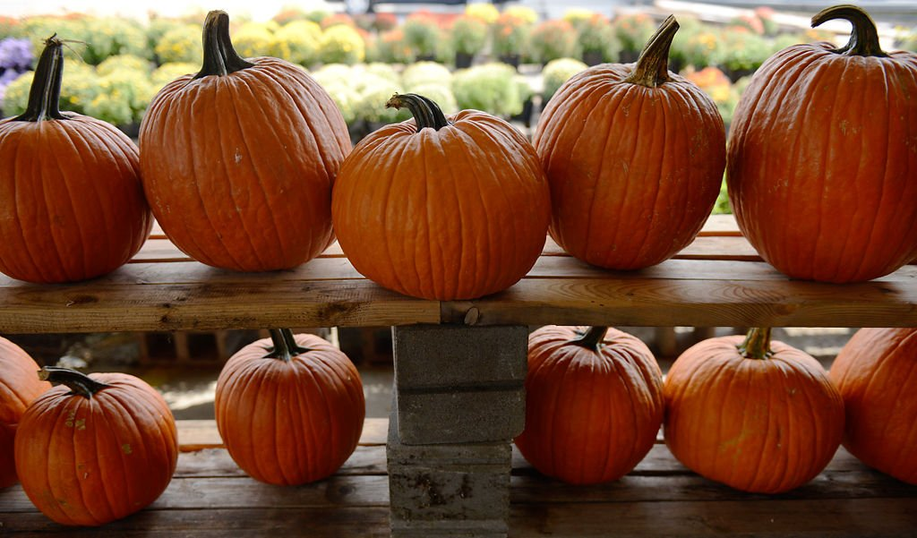 pumpkins line the shelves at wilsons garden center - Wilsons Garden Center