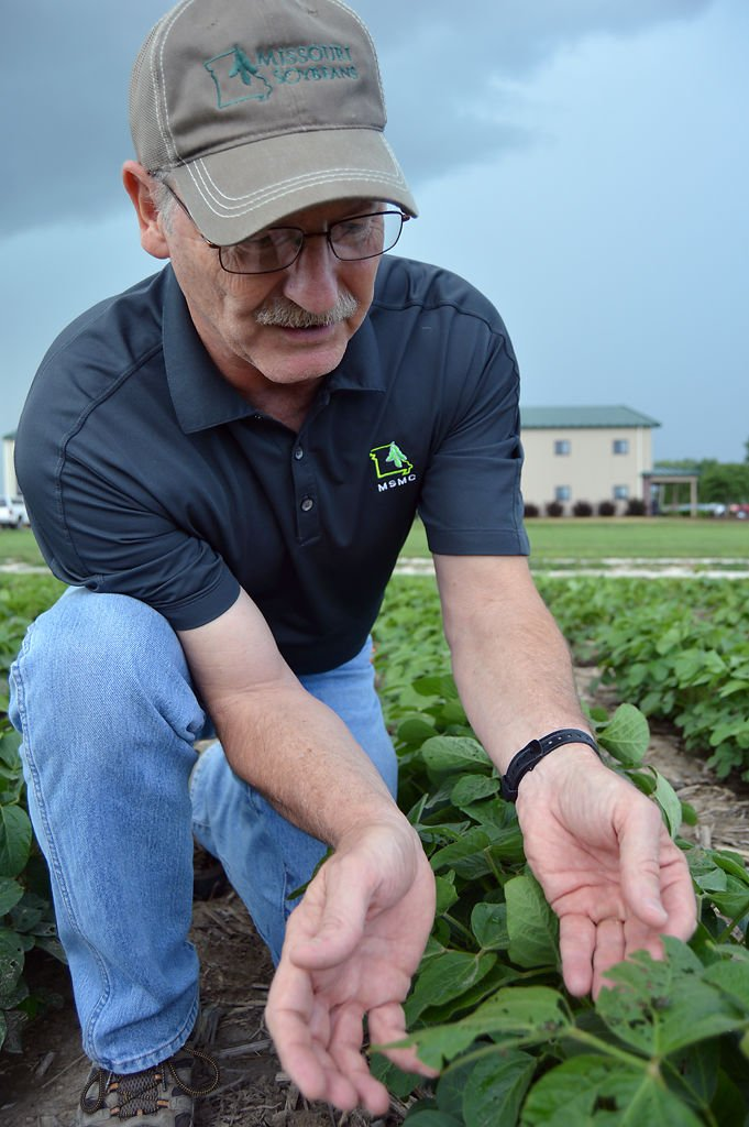 Greg Luce examines the leaves of the soybean plants