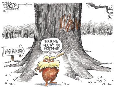 Protecting the bur oak tree