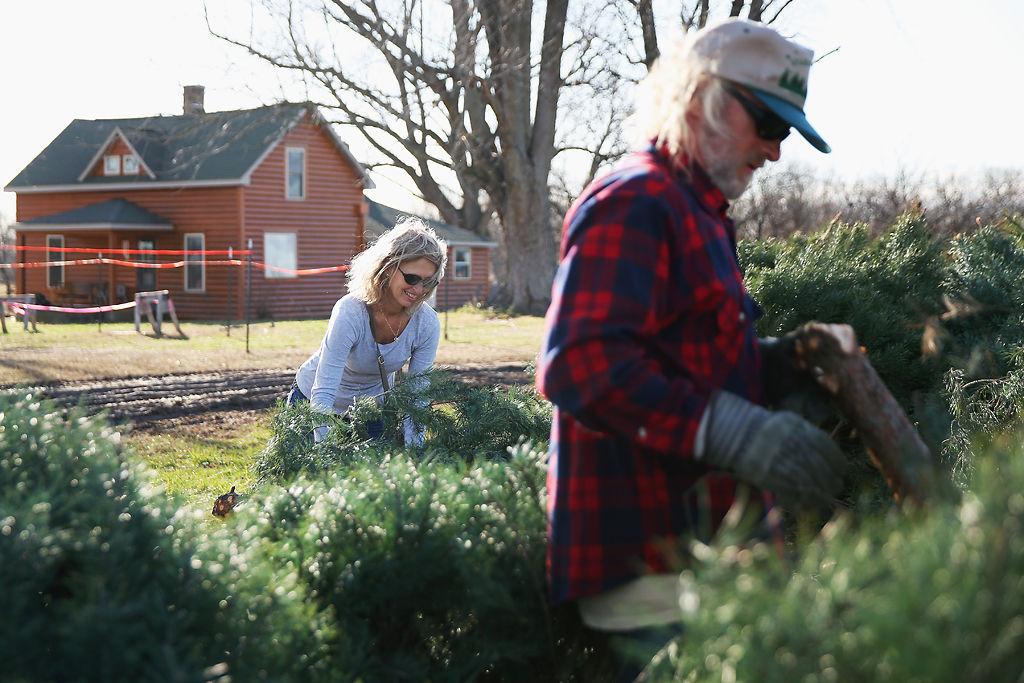 Warmer, wetter holiday season has mixed impact on Christmas tree sales - Warmer, Wetter Holiday Season Has Mixed Impact On Christmas Tree