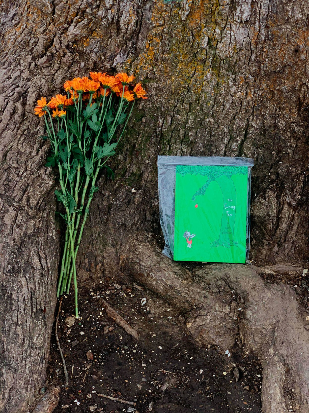 """A bundle of flowers and a copy of Shel Silverstein's """"The Giving Tree"""" lie at the base of the bur oak tree"""