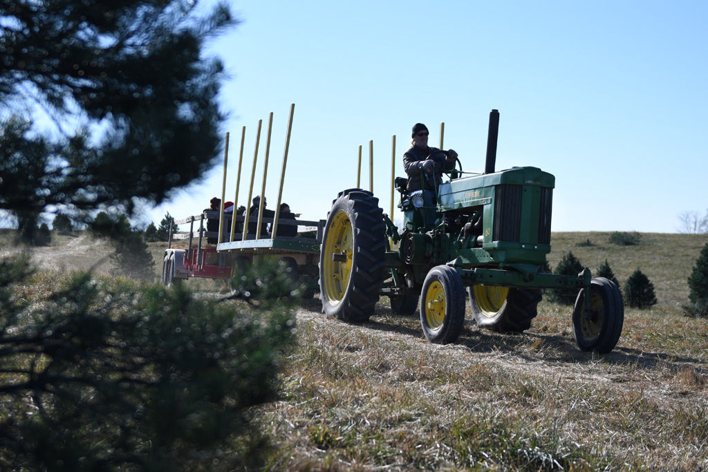 Christmas tree farm thrives despite changes in trees, trends, weather - Christmas Tree Farm Thrives Despite Changes In Trees, Trends