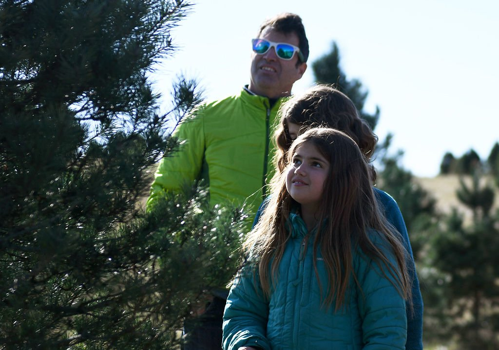 John Evelev and his daughter evaluate the quality of a tree - Christmas Tree Farm Thrives Despite Changes In Trees, Trends