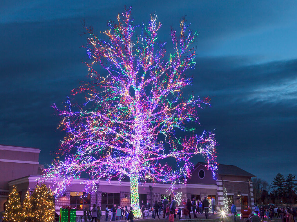 With 200,000 Lights, The Magic Tree At The Crossing