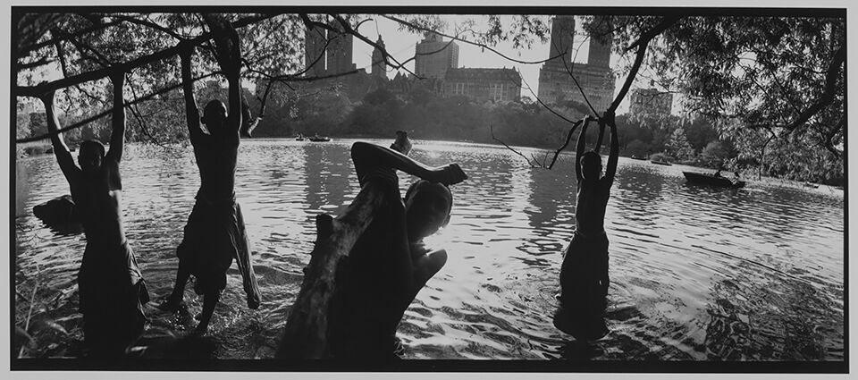 Young people hanging from tree branches into a lake in Central Park