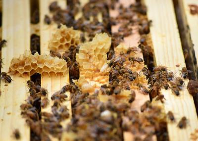 At Fairview Elementary, program for beekeeping newbies buzzes along
