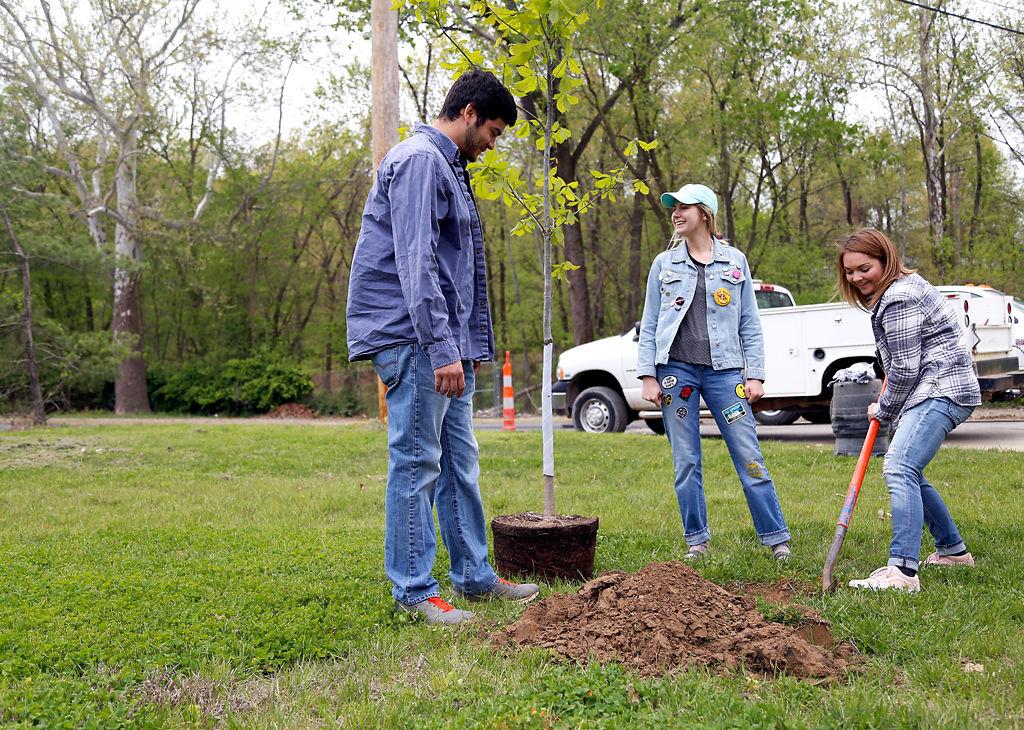 Volunteers plant a Swamp Chestnut Oak tree