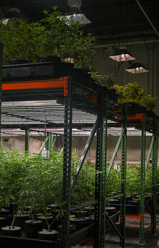 The vegetative room of BeLeaf in Earth City