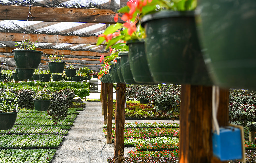 30+ Wilsons garden center columbia mo information