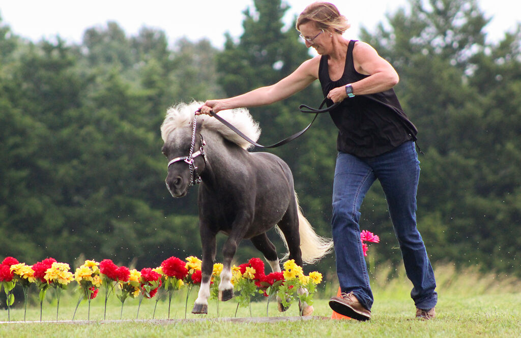 Susan Dudley and Hollywood jump over flowers