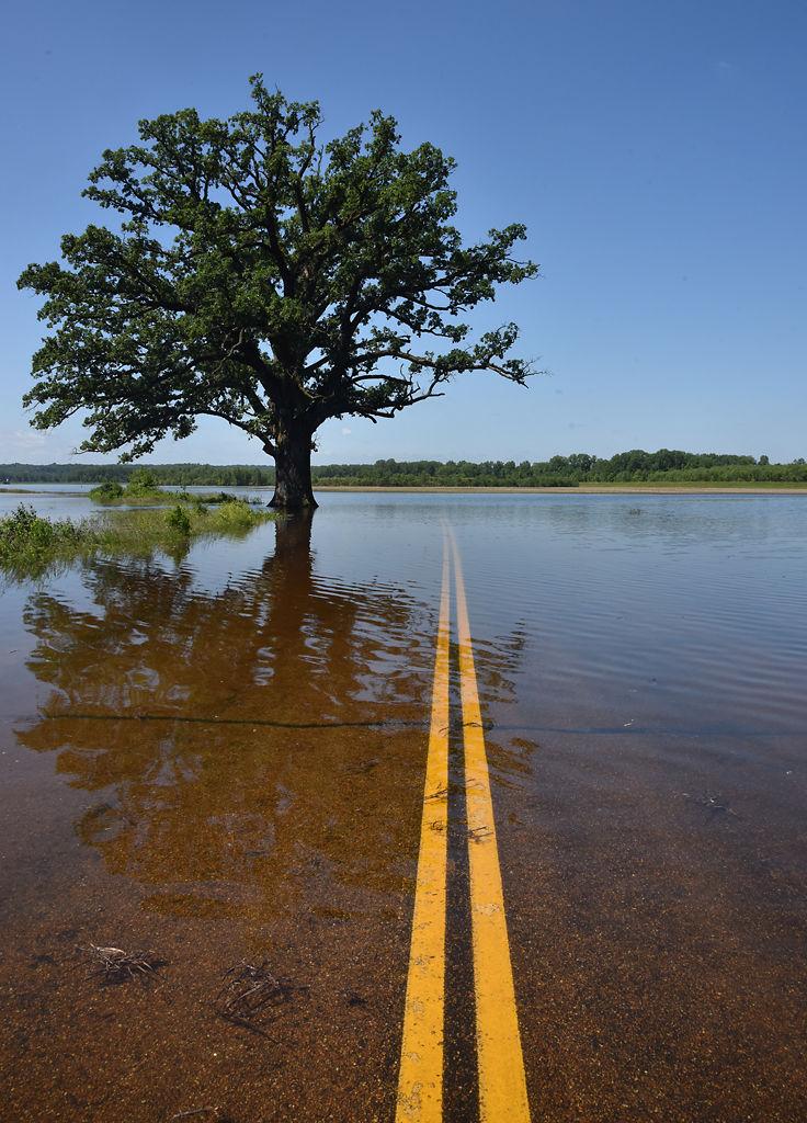 The Bur Oak Tree was partially submerged
