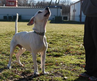 Cooper plays in the backyard at Central Missouri Humane Society