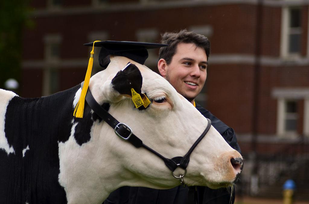 Matthew Burdick takes a photo with the dairy cow, Desirae
