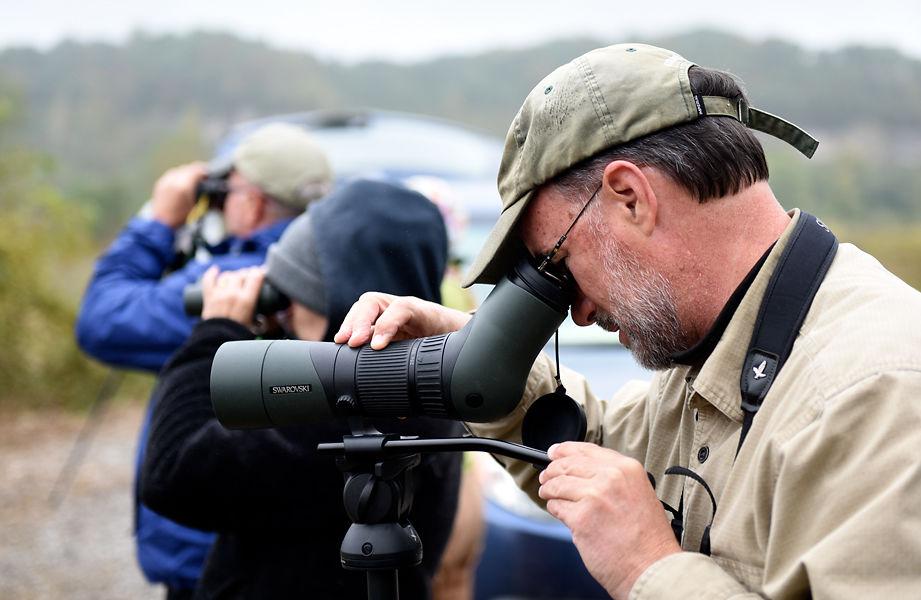 John Besser watches swamp sparrows