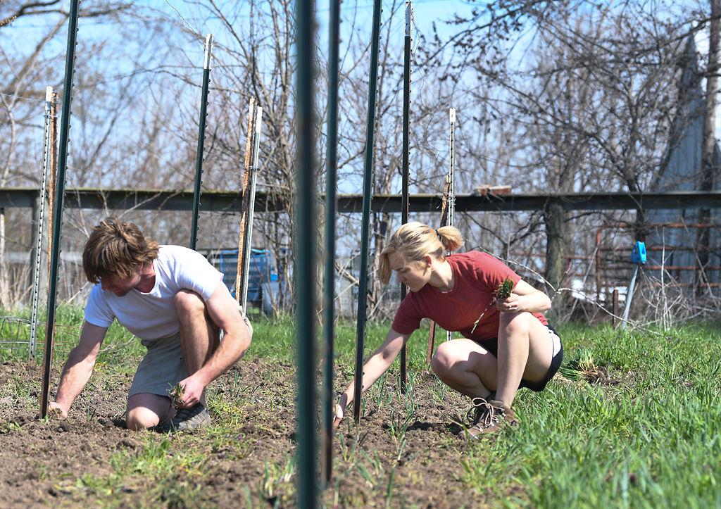 Walker Claridge, left, and Megan Casady grow onions together